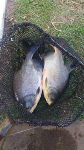 Novidade para os amantes da pescaria